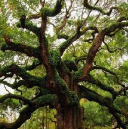 ¿Que hace a un árbol fuerte?